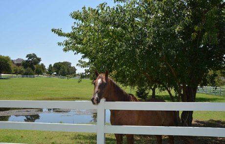 Horse Denton Tx