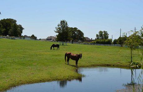 Corinth Tx Horses